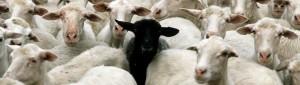 sheep0001.jpg
